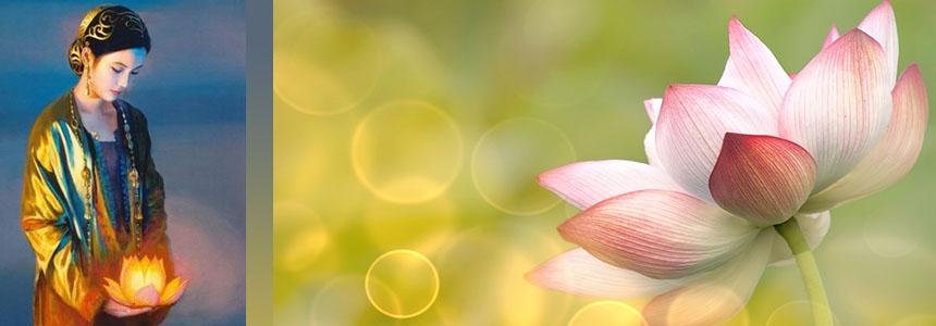 Meditace Lotosový květ probouzí Duši člověka