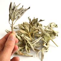 Bílá šalvěj - Salvia Apiana listy 20 g