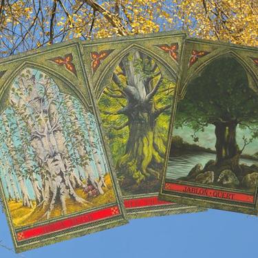 Keltské orákulum stromů  - 1