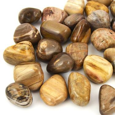 Zkamenělé dřevo tamblovaný, velikost XL  - 1