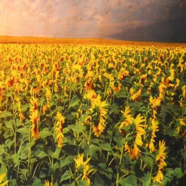 Šátek - přehoz Pole slunečnic  - 2