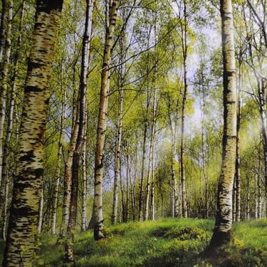 Šátek - přehoz Březový les  - 2
