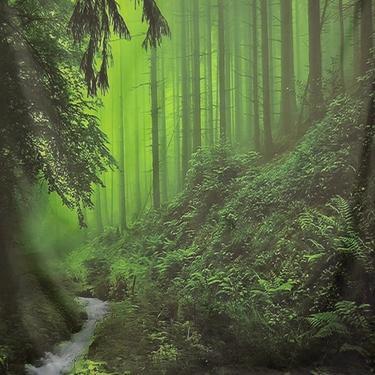 Šátek - přehoz V hlubinách lesa  - 2