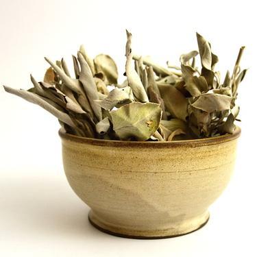 Bílá šalvěj - Salvia Apiana listy 20 g  - 2