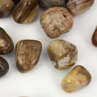 Zkamenělé dřevo tamblovaný, velikost XL  - 2